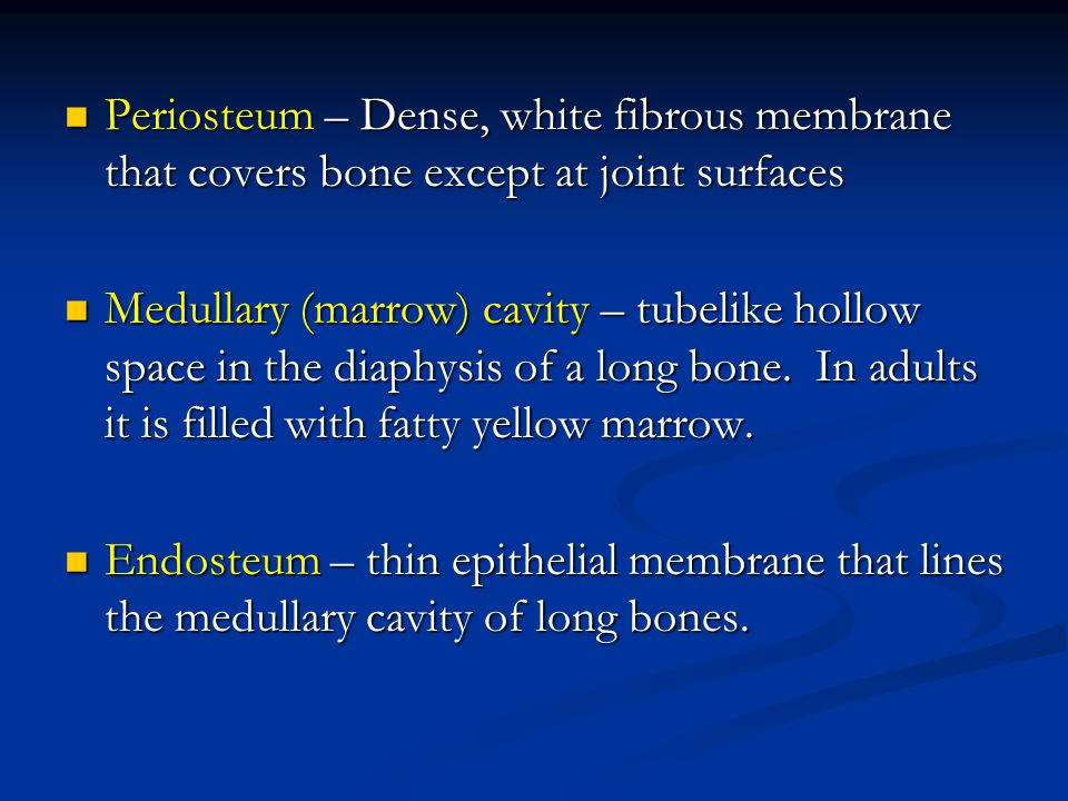 Periosteum – Dense, white fibrous membrane that covers bone except at joint surfaces