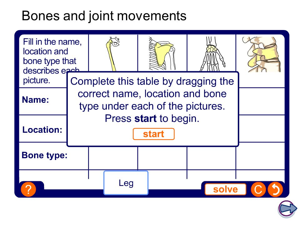 Bones and joint movements