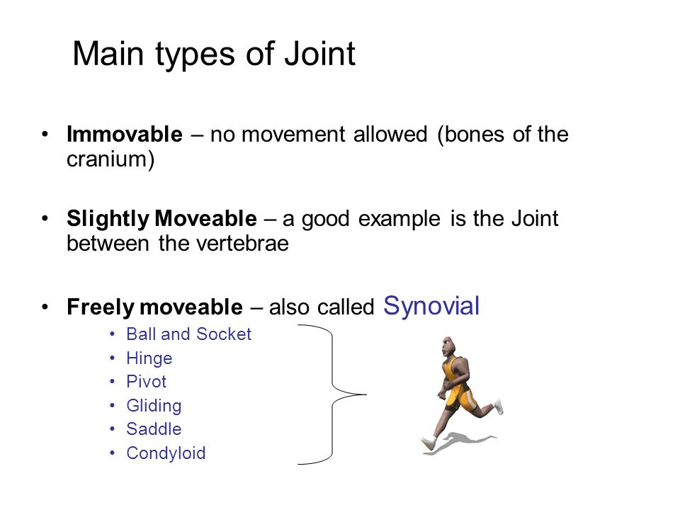 Main types of Joint Immovable – no movement allowed (bones of the cranium) Slightly Moveable – a good example is the Joint between the vertebrae.