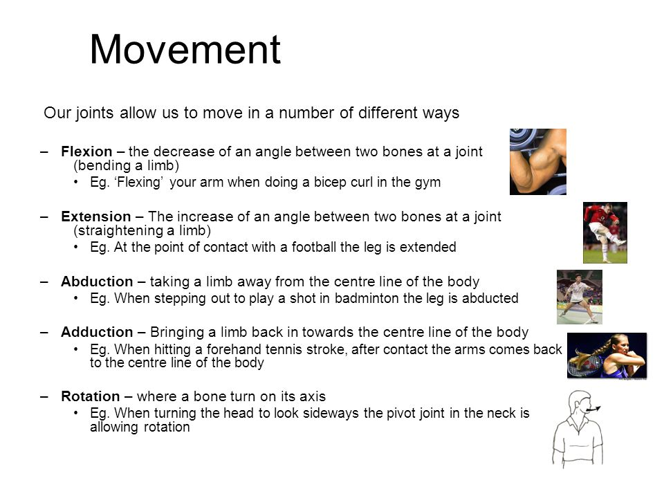 Movement Our joints allow us to move in a number of different ways