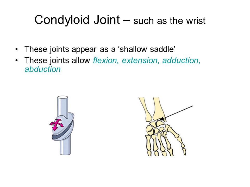 Condyloid Joint – such as the wrist