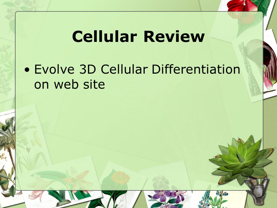 Cellular Review Evolve 3D Cellular Differentiation on web site