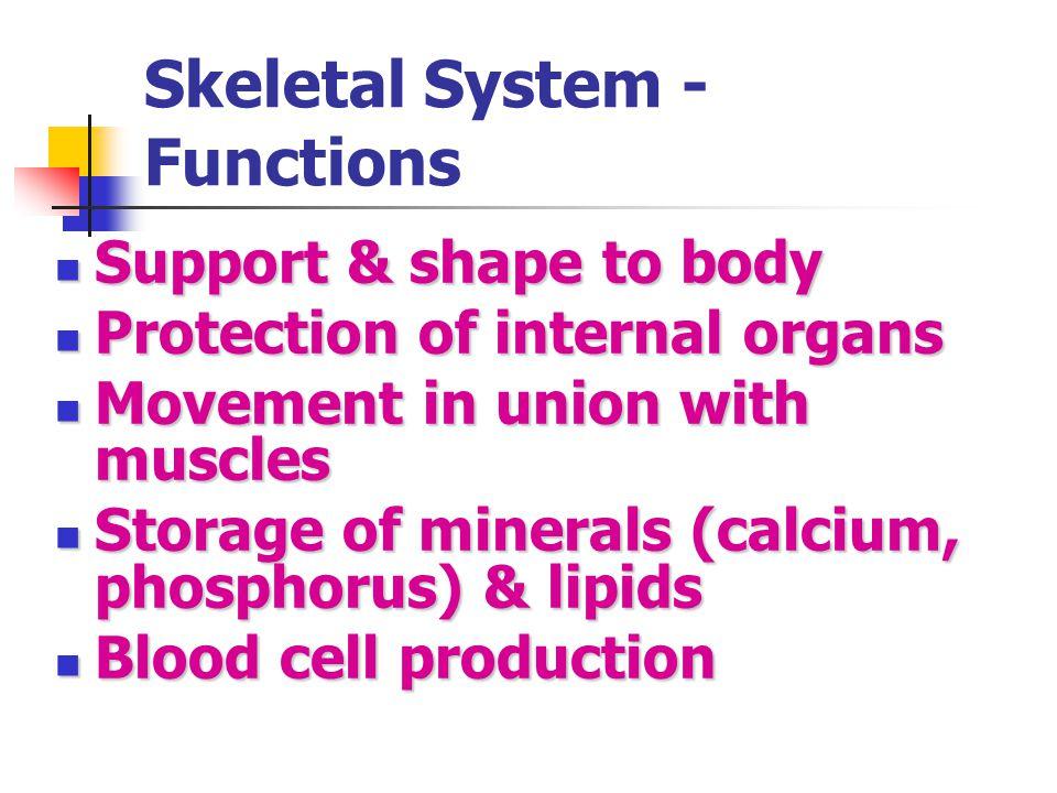 Skeletal System - Functions