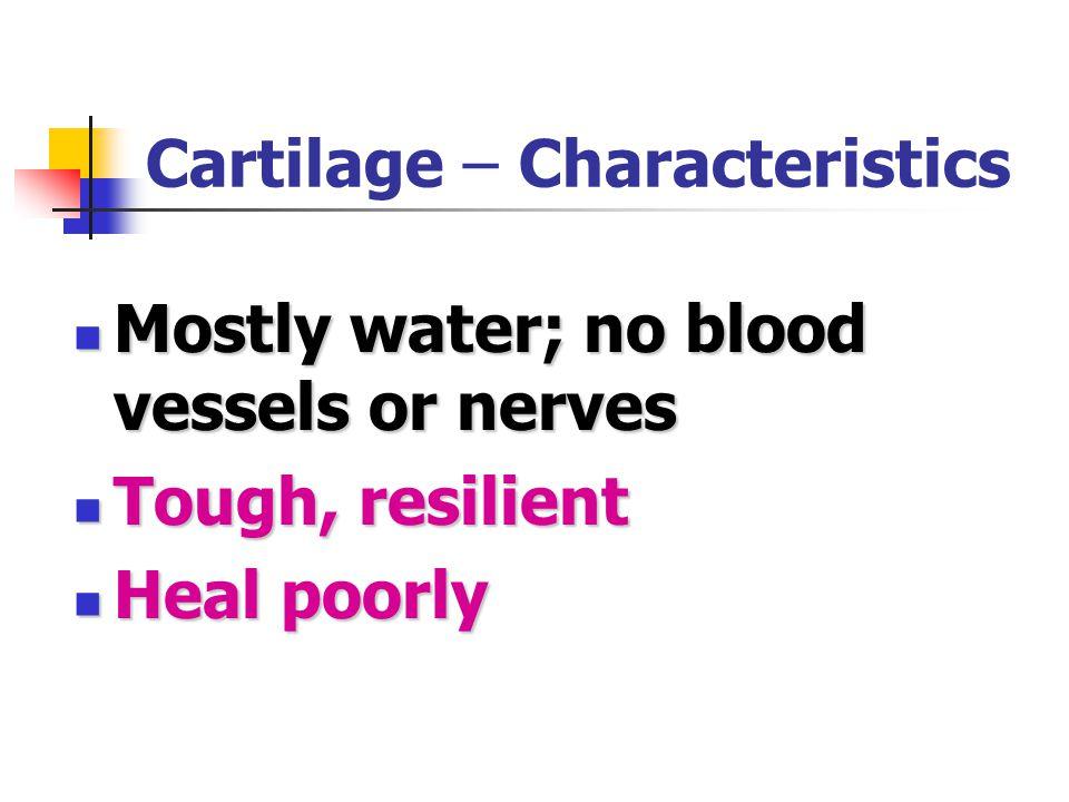 Cartilage – Characteristics