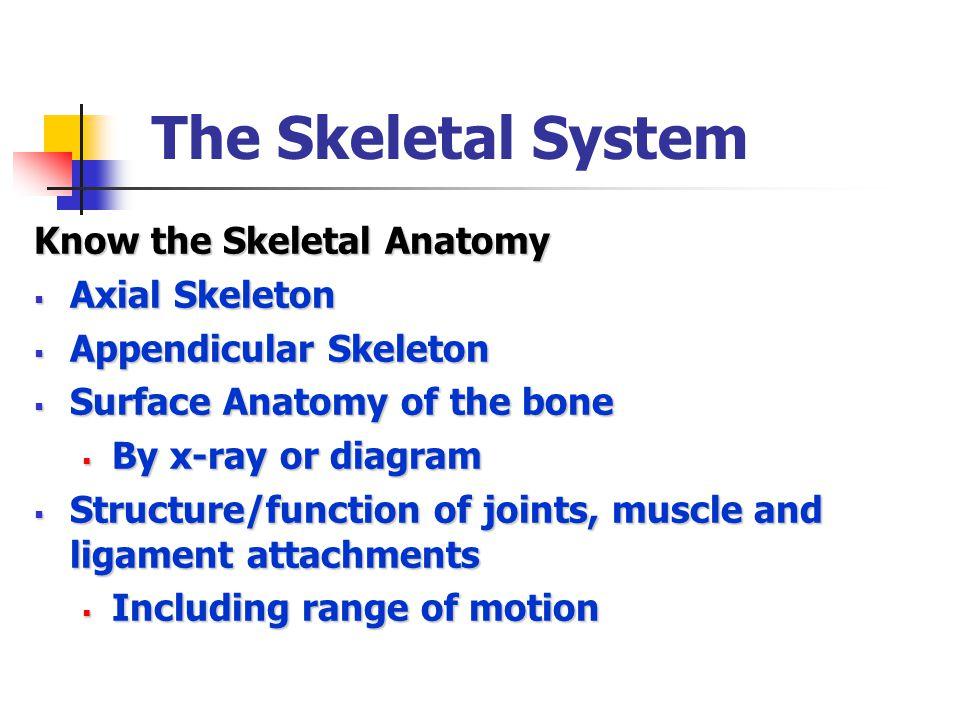The Skeletal System Know the Skeletal Anatomy Axial Skeleton