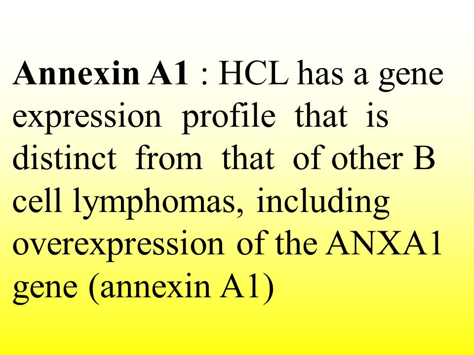 Annexin A1 : HCL has a gene expression profile that is distinct from that of other B cell lymphomas, including overexpression of the ANXA1 gene (annexin A1)