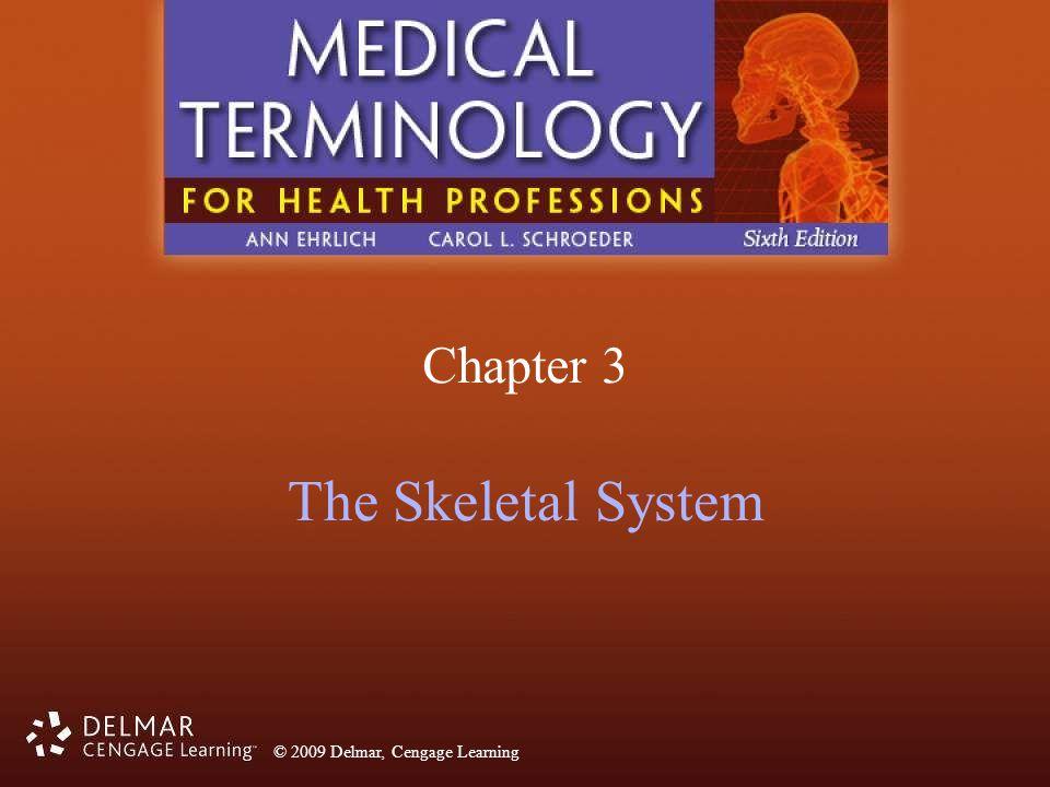 Chapter 3 The Skeletal System