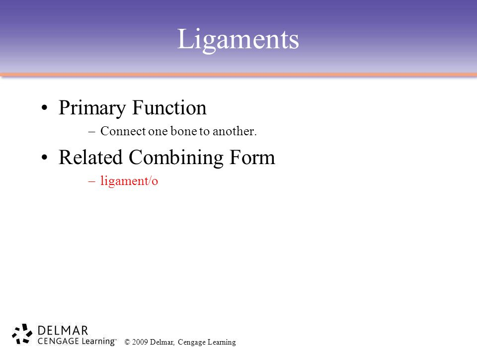 Ligaments Primary Function Related Combining Form