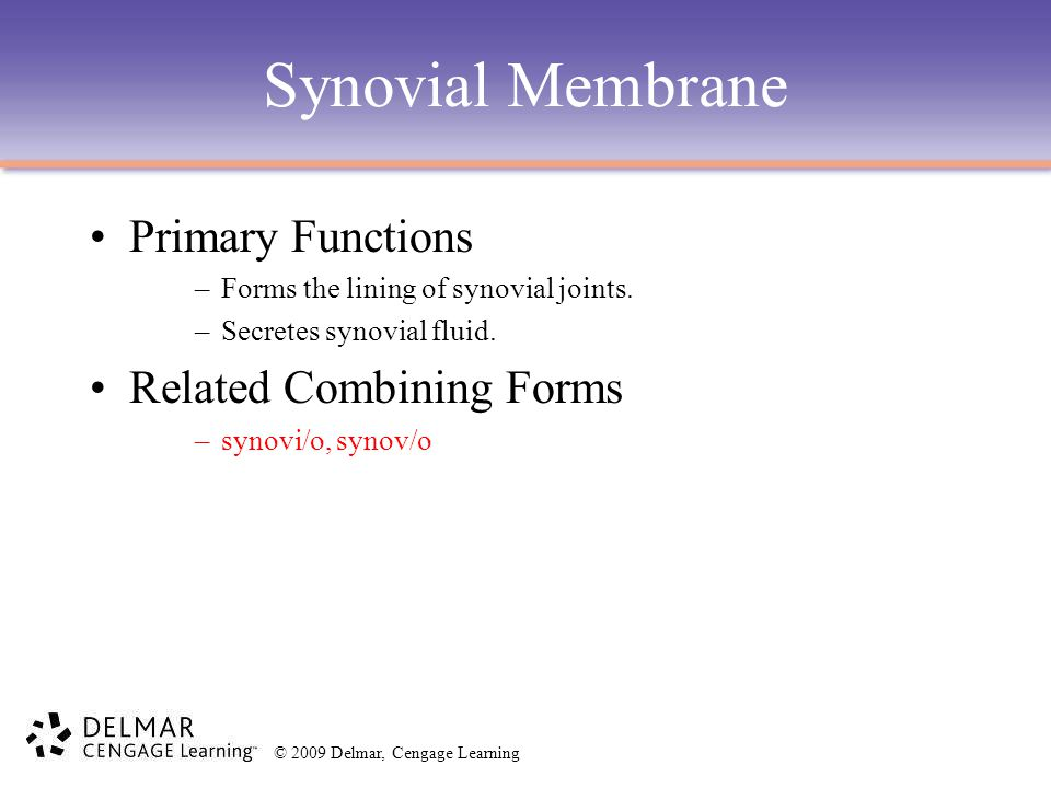 Synovial Membrane Primary Functions Related Combining Forms