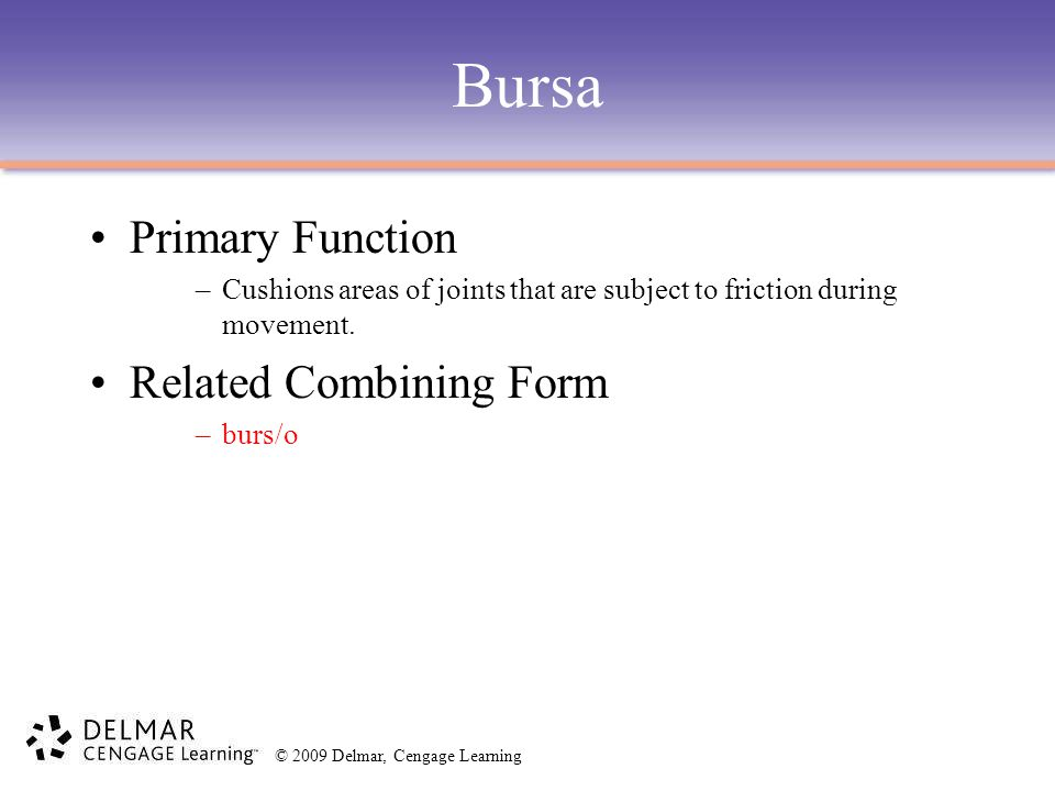 Bursa Primary Function Related Combining Form