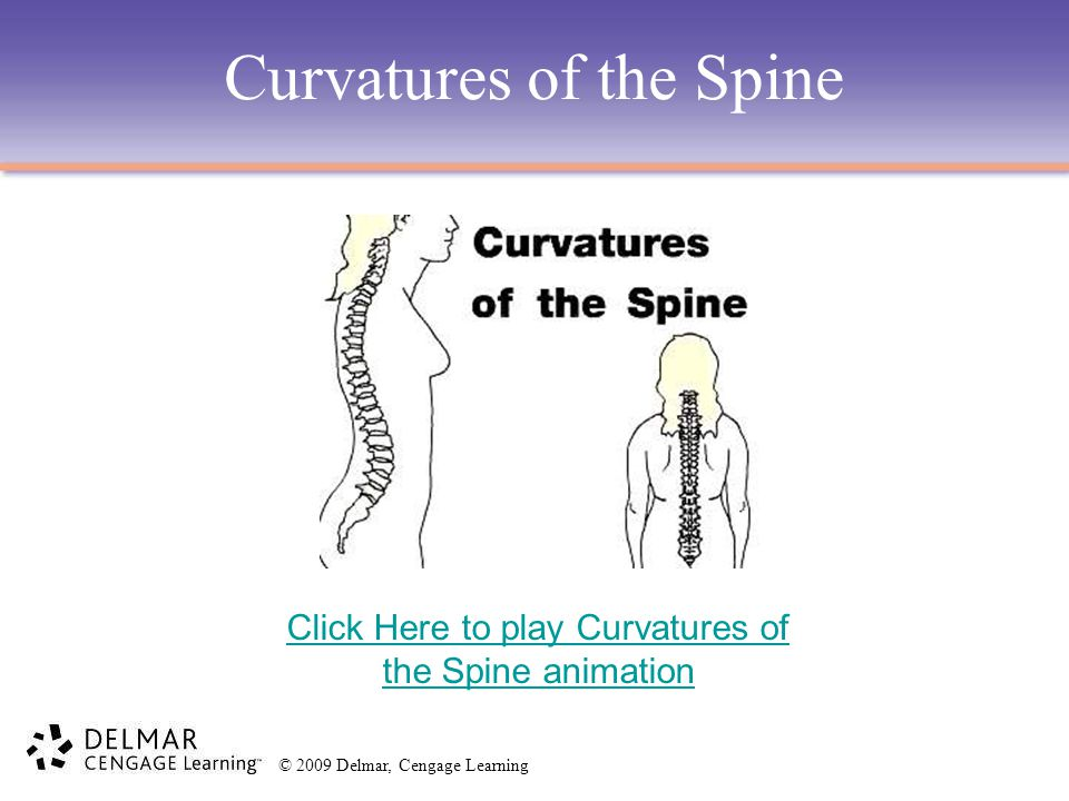 Curvatures of the Spine