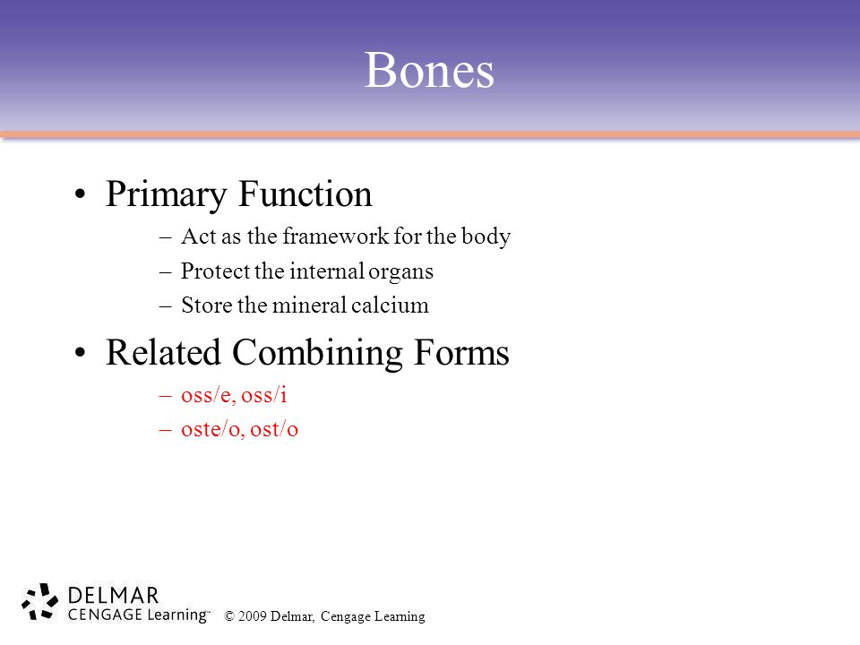 Bones Primary Function Related Combining Forms