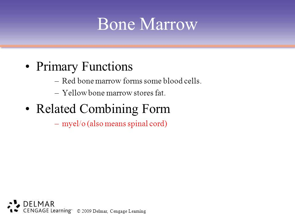 Bone Marrow Primary Functions Related Combining Form
