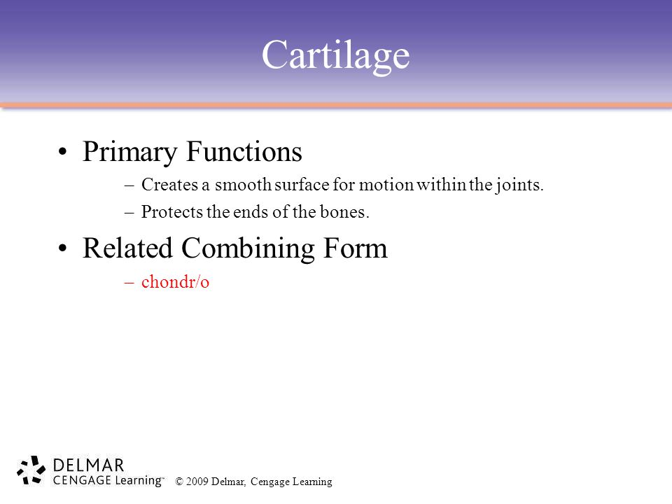 Cartilage Primary Functions Related Combining Form