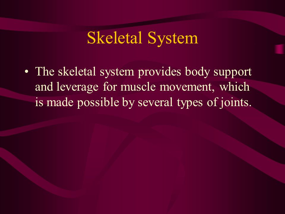 Skeletal System The skeletal system provides body support and leverage for muscle movement, which is made possible by several types of joints.