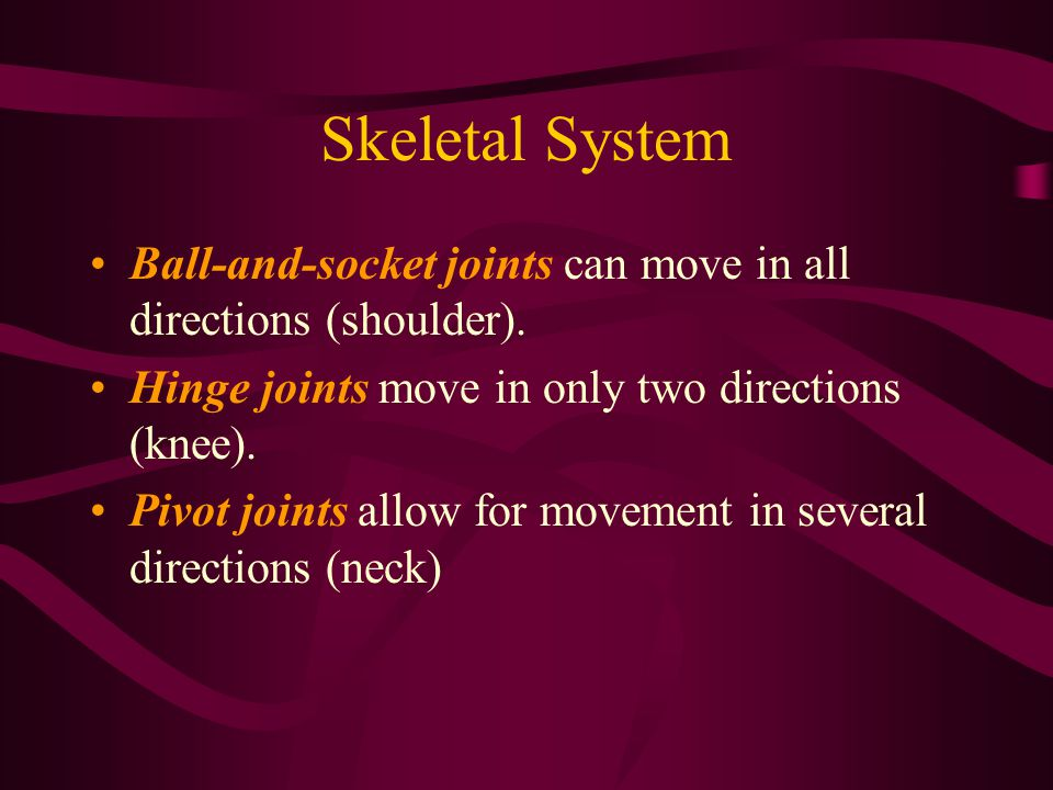 Skeletal System Ball-and-socket joints can move in all directions (shoulder). Hinge joints move in only two directions (knee).