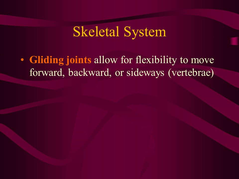 Skeletal System Gliding joints allow for flexibility to move forward, backward, or sideways (vertebrae)