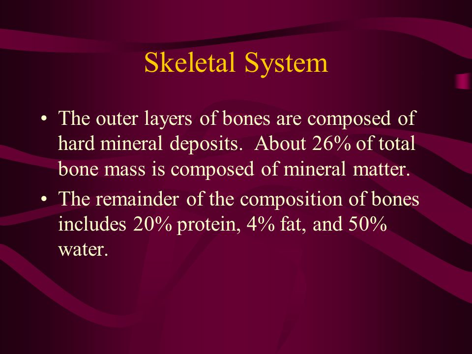 Skeletal System The outer layers of bones are composed of hard mineral deposits. About 26% of total bone mass is composed of mineral matter.
