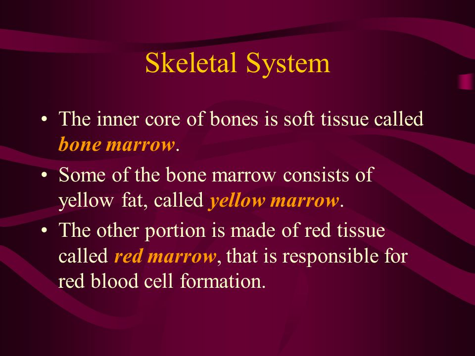 Skeletal System The inner core of bones is soft tissue called bone marrow. Some of the bone marrow consists of yellow fat, called yellow marrow.
