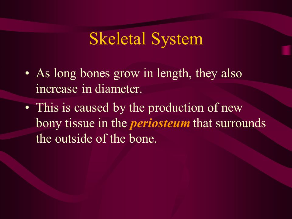 Skeletal System As long bones grow in length, they also increase in diameter.