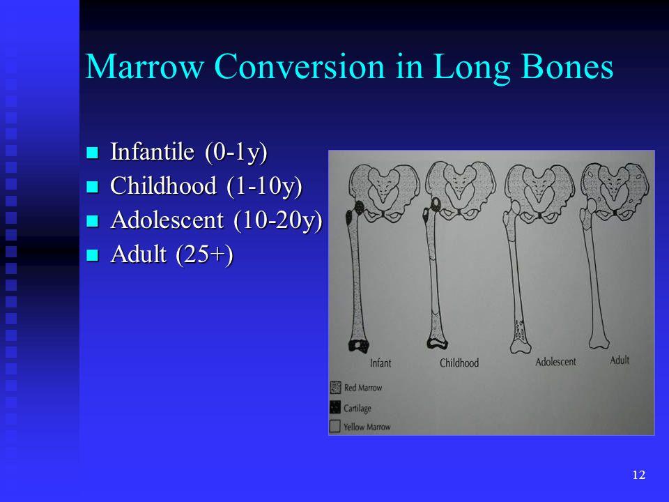 Marrow Conversion in Long Bones