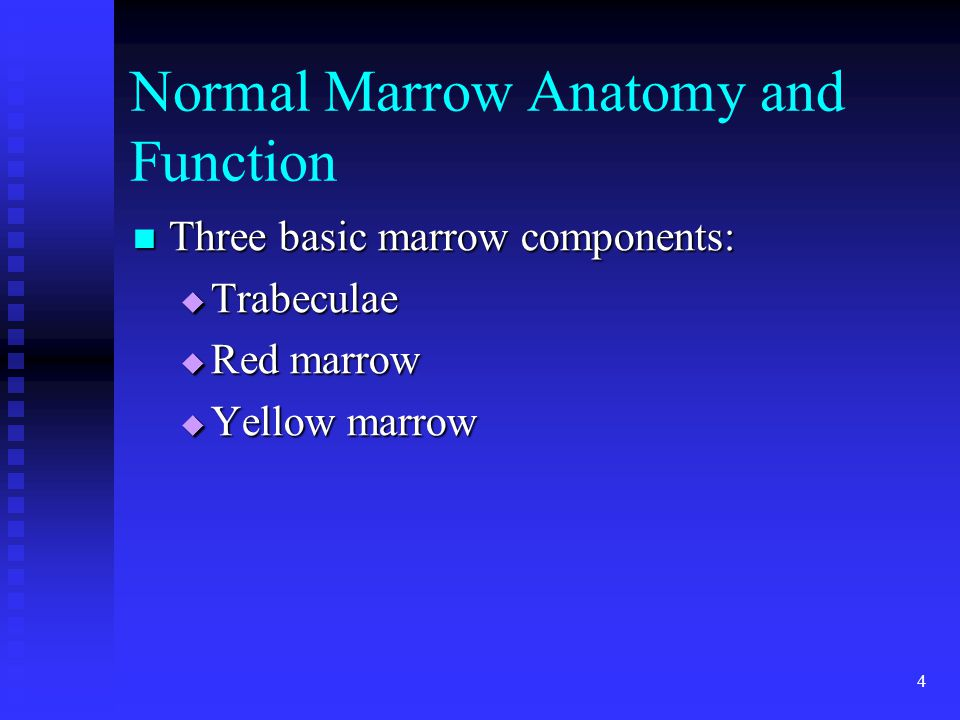 Normal Marrow Anatomy and Function