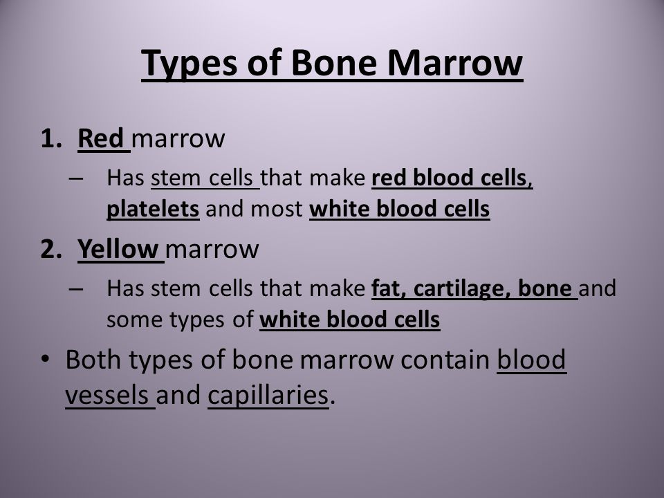 Types of Bone Marrow Red marrow Yellow marrow