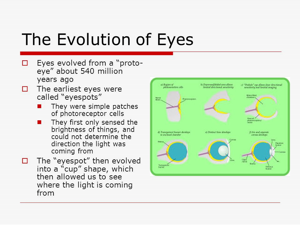 The Evolution of Eyes Eyes evolved from a proto-eye about 540 million years ago. The earliest eyes were called eyespots