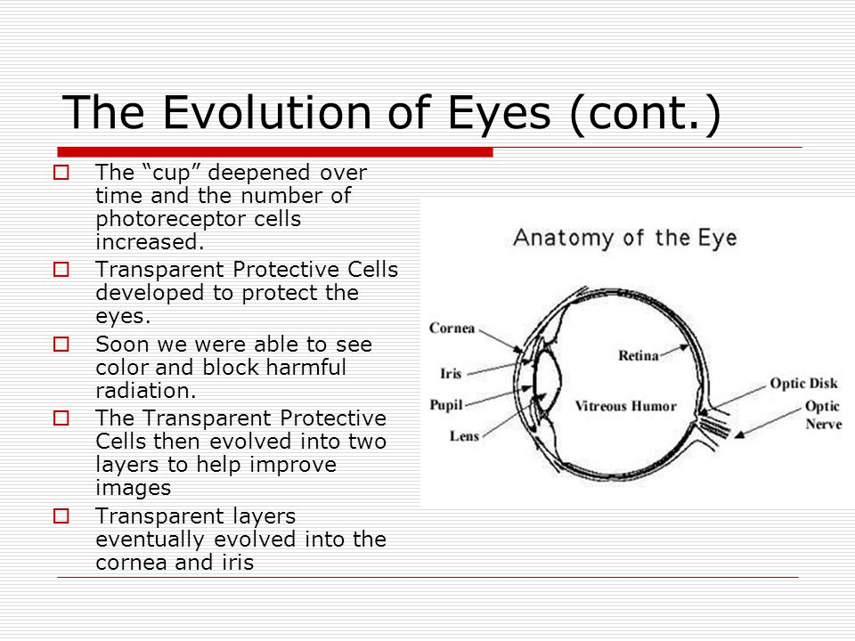 The Evolution of Eyes (cont.)