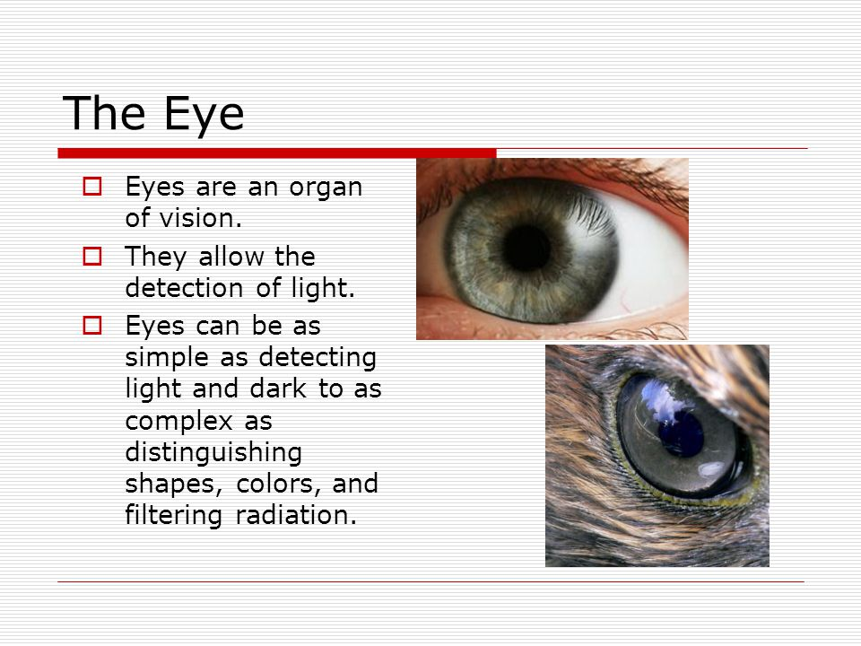 The Eye Eyes are an organ of vision.
