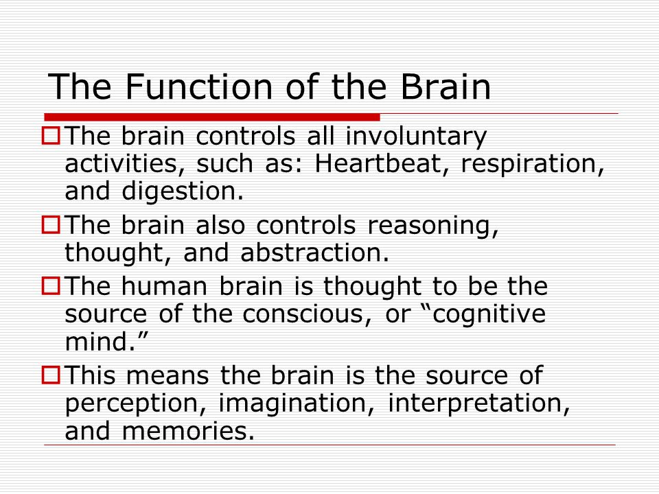 The Function of the Brain