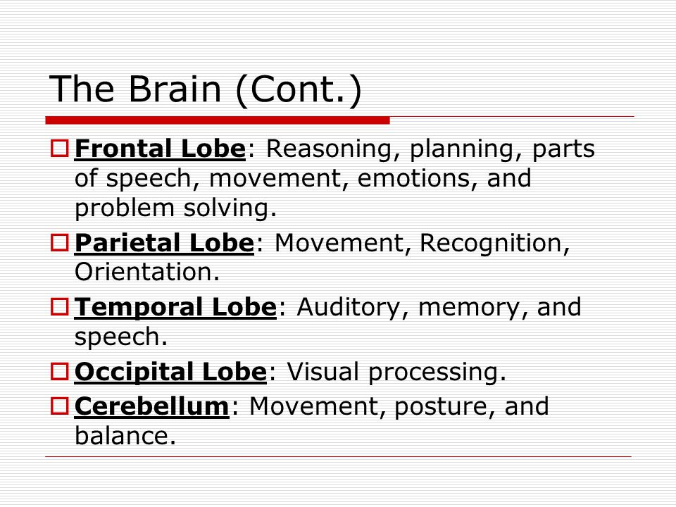 The Brain (Cont.) Frontal Lobe: Reasoning, planning, parts of speech, movement, emotions, and problem solving.