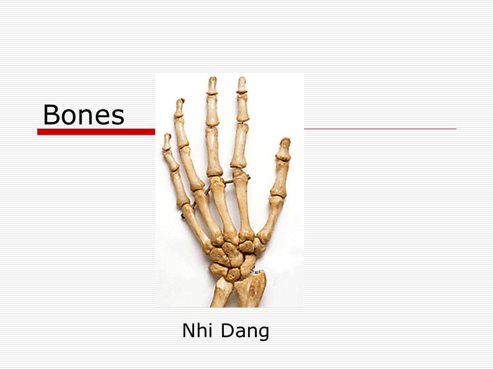 Bones Nhi Dang