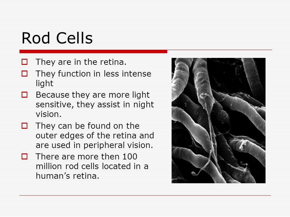 Rod Cells They are in the retina. They function in less intense light
