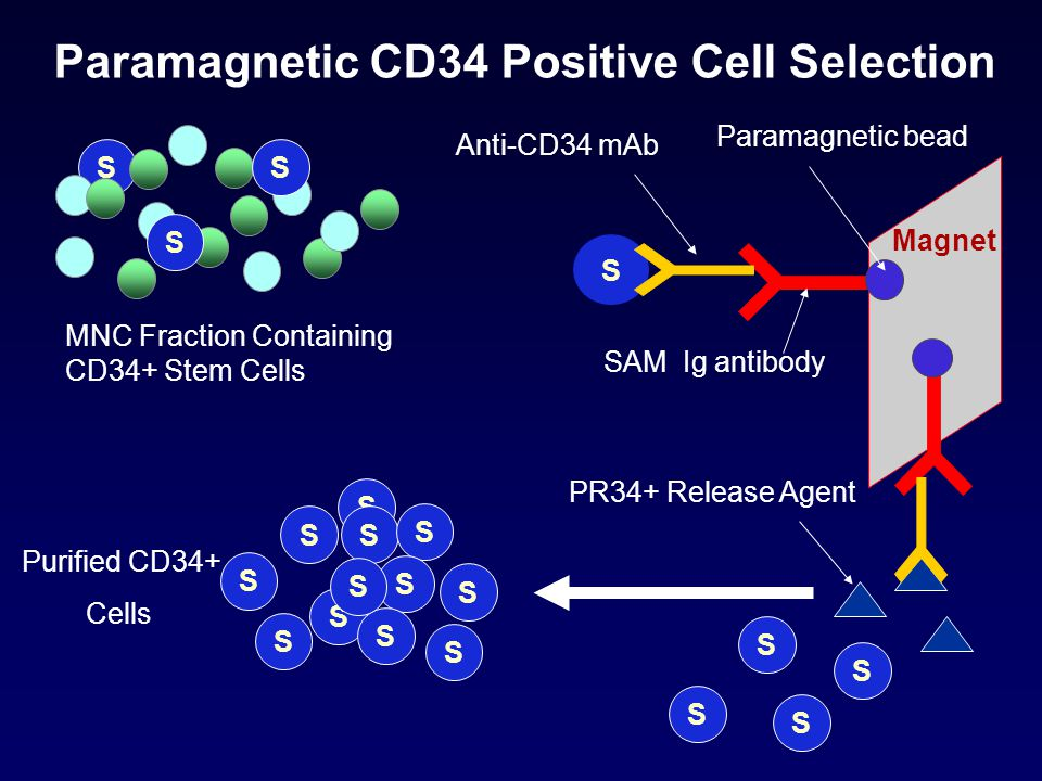 Paramagnetic CD34 Positive Cell Selection
