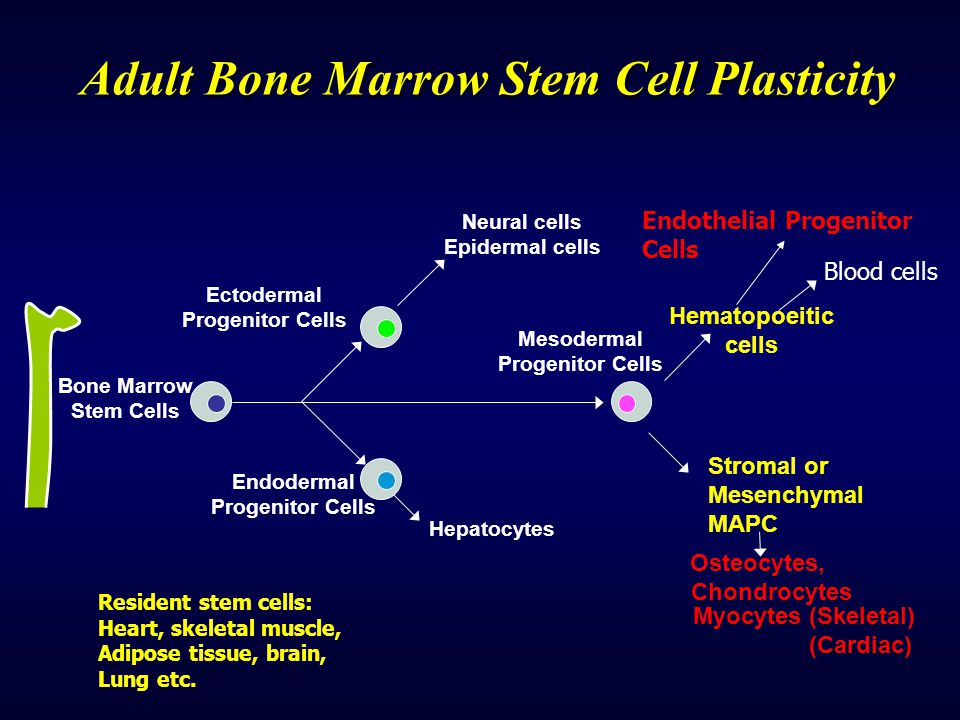 Adult Bone Marrow Stem Cell Plasticity
