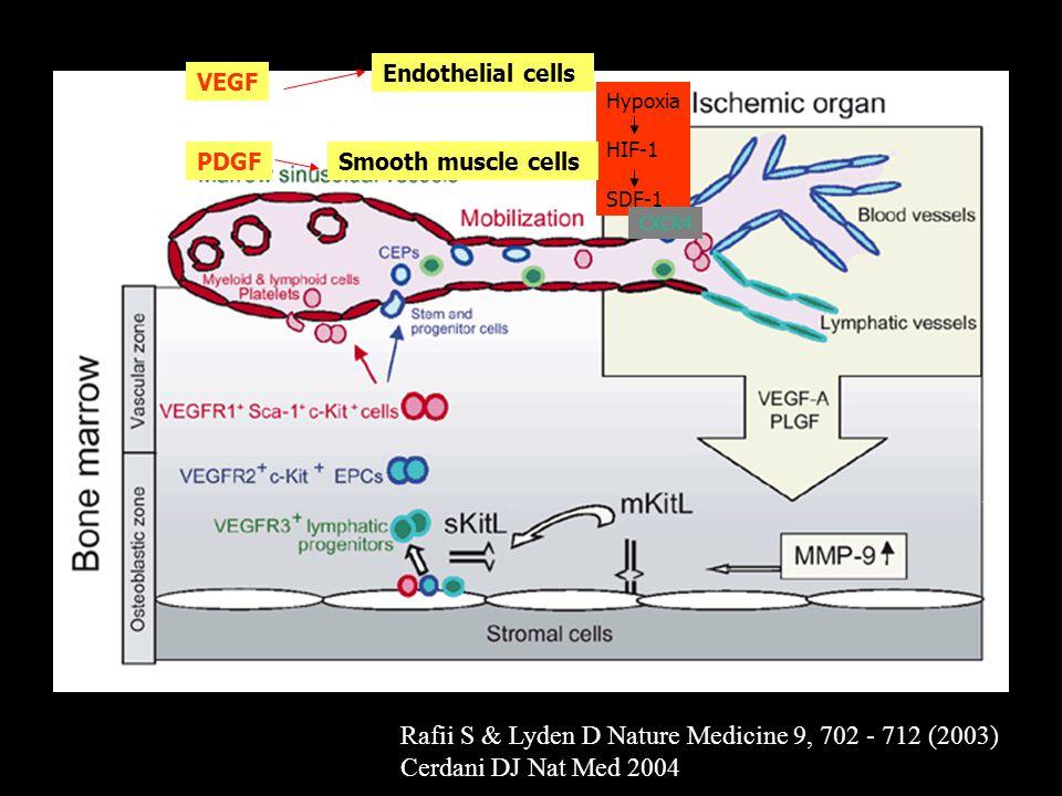 Rafii S & Lyden D Nature Medicine 9, 702 - 712 (2003)