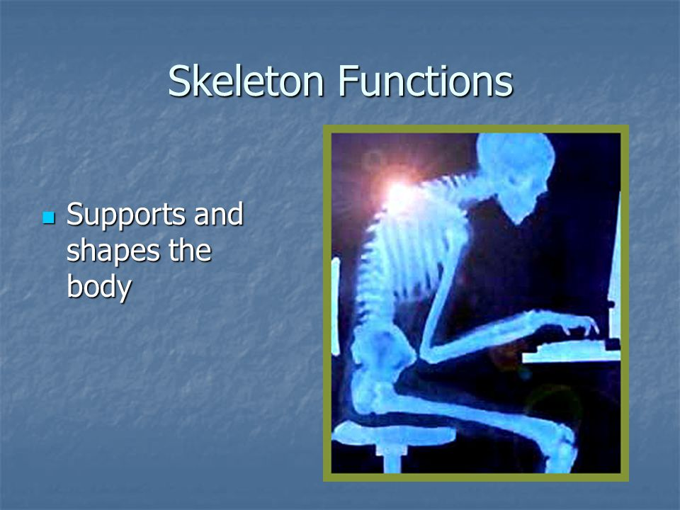 Skeleton Functions Supports and shapes the body