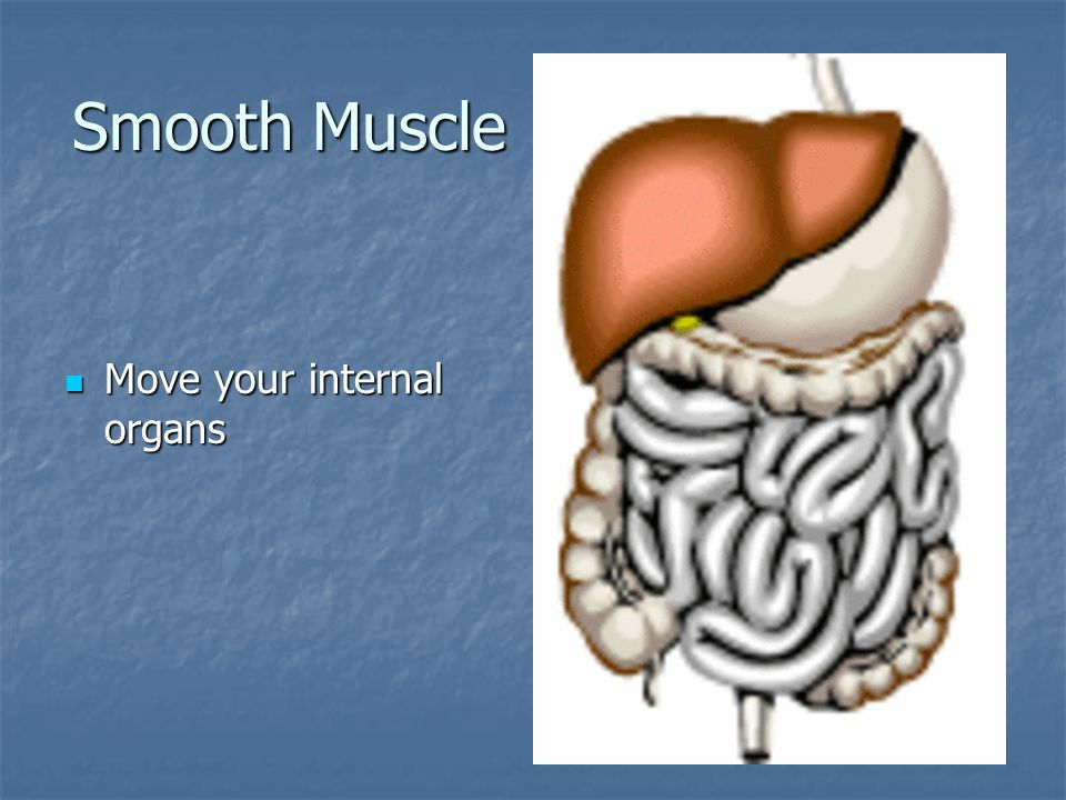 Smooth Muscle Move your internal organs
