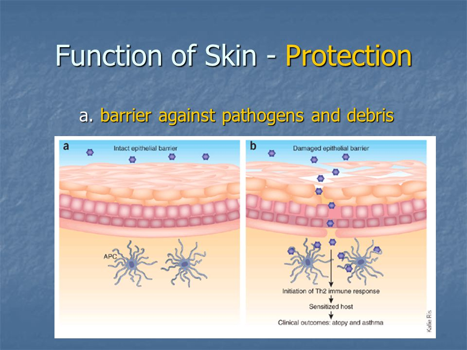 Function of Skin - Protection