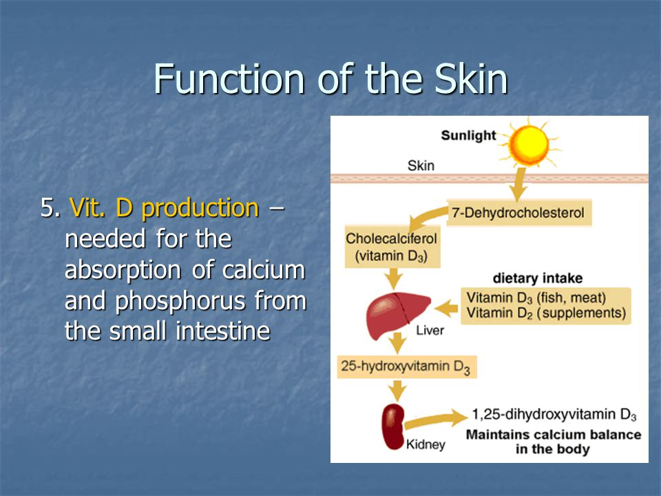 Function of the Skin 5. Vit.