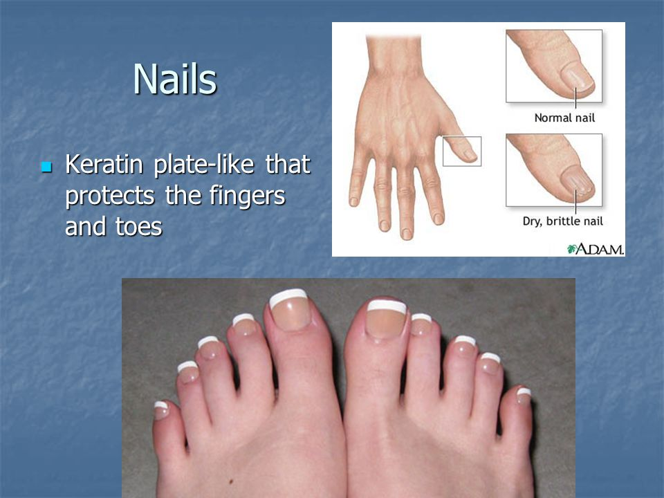 Nails Keratin plate-like that protects the fingers and toes