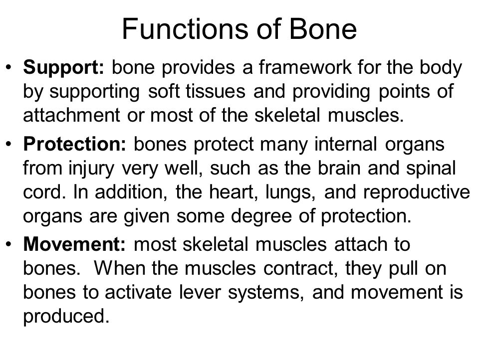 Functions of Bone