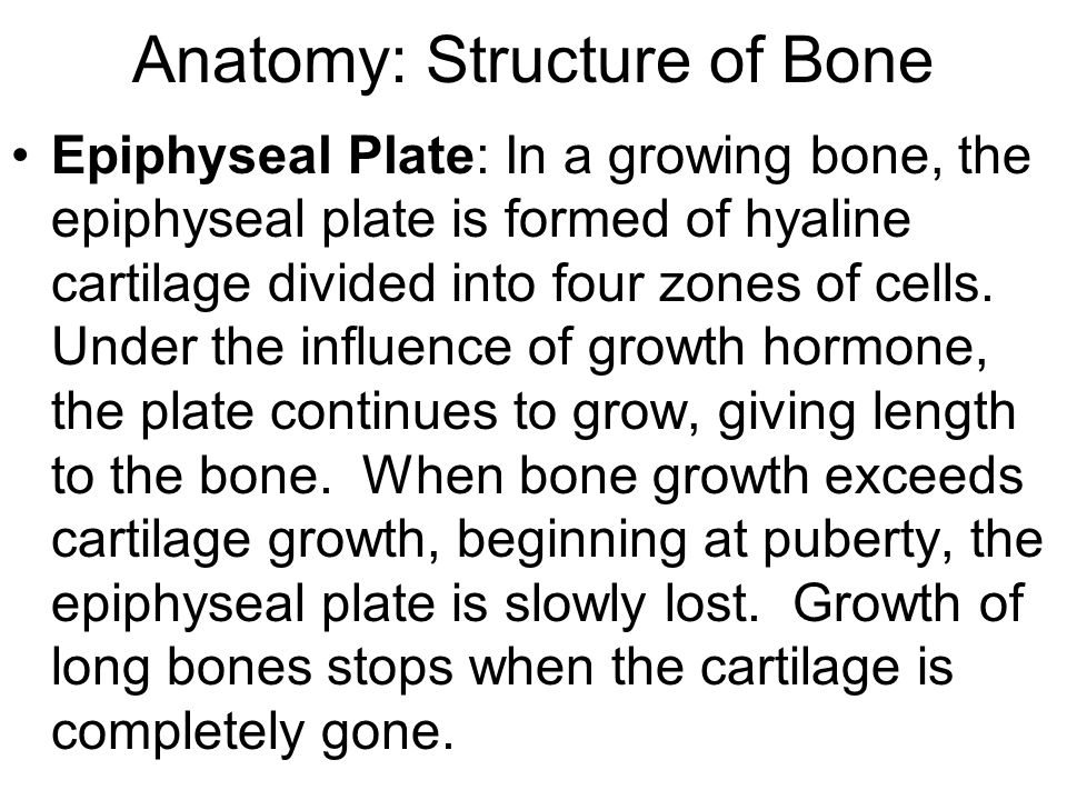 Anatomy: Structure of Bone