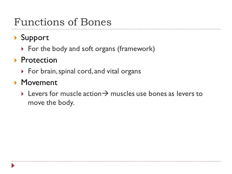 Functions of Bones Support Protection Movement