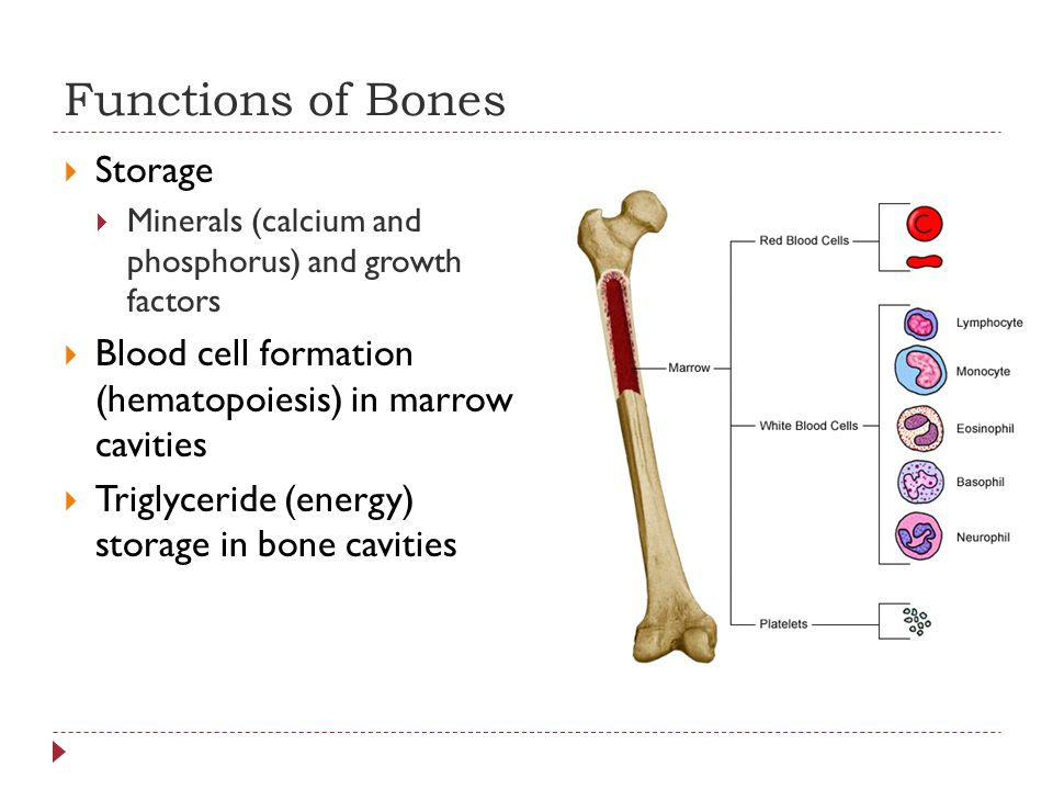 Functions of Bones Storage