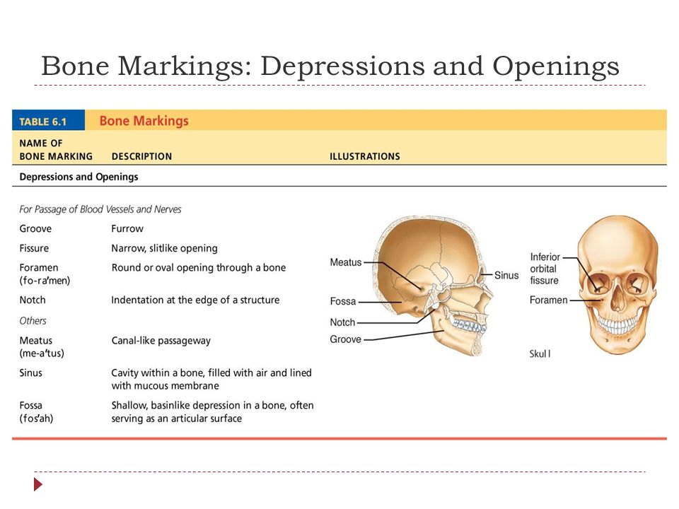 Bone Markings: Depressions and Openings