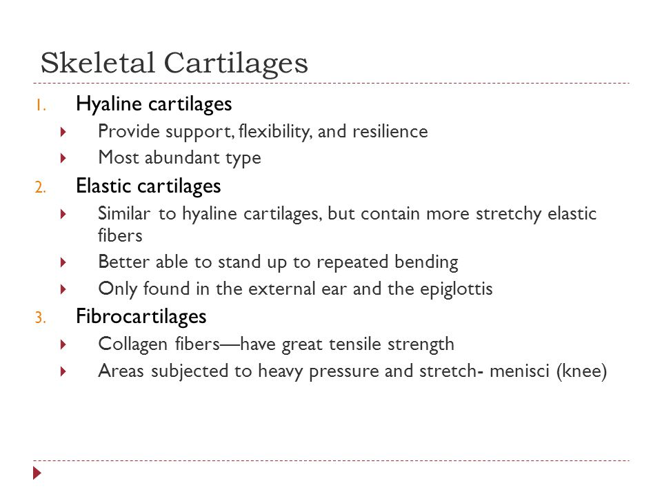 Skeletal Cartilages Hyaline cartilages Elastic cartilages
