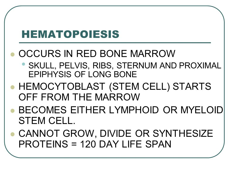 HEMATOPOIESIS OCCURS IN RED BONE MARROW