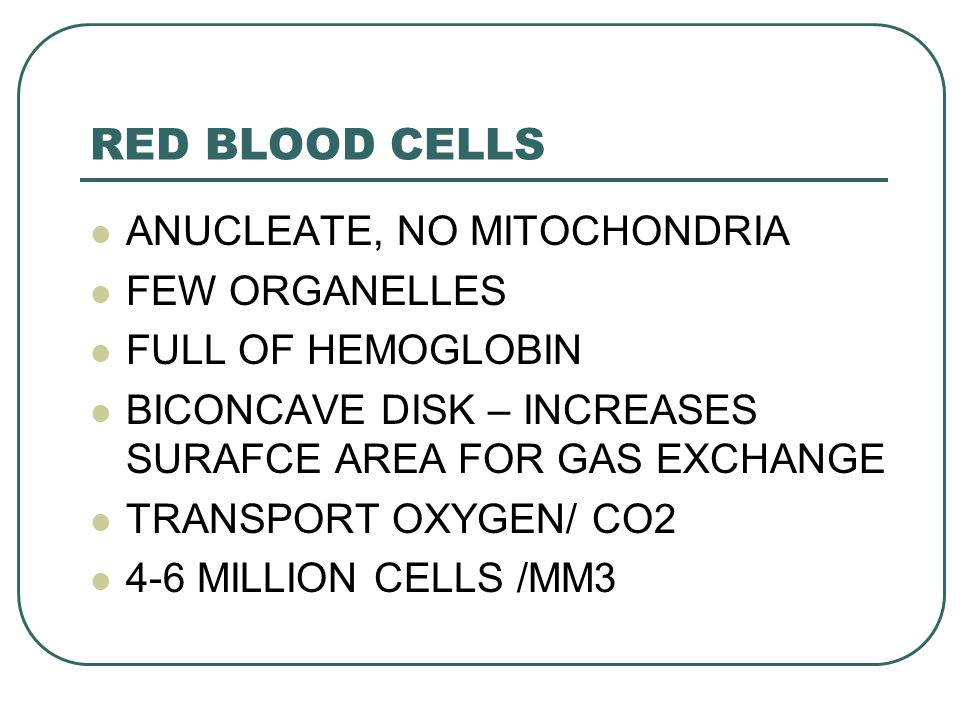 RED BLOOD CELLS ANUCLEATE, NO MITOCHONDRIA FEW ORGANELLES
